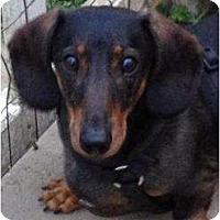 Adopt A Pet :: Mister - Killingworth, CT