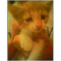 Adopt A Pet :: Stripes - Owasso, OK