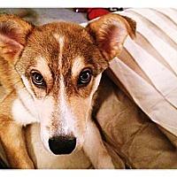 Adopt A Pet :: Thor - Louisville, KY