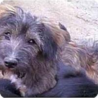 Adopt A Pet :: MACKIE - dewey, AZ