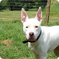 Adopt A Pet :: Piglet~ADOPTED - Lapeer, MI