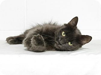 Domestic Mediumhair Cat for adoption in Lufkin, Texas - Minnie