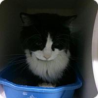 Adopt A Pet :: Mervin - Hamilton, ON