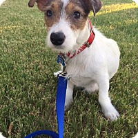 Adopt A Pet :: Birdy In Dallas ADOPT PENDING - Dallas/Ft. Worth, TX