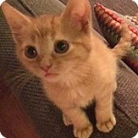 Adopt A Pet :: Mitchell - St. Louis, MO
