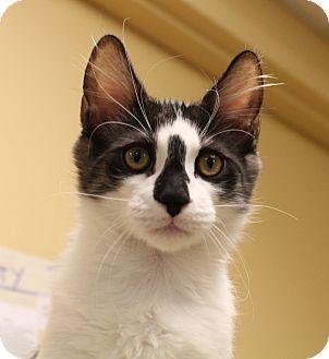 Domestic Longhair Cat for adoption in San Leandro, California - Masumi