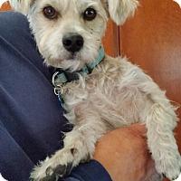 Adopt A Pet :: Sparky - Adoption Pending - Gig Harbor, WA