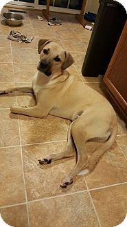 Anatolian Shepherd Mix Dog for adoption in fredericksburg, Virginia - Binks