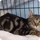 Adopt A Pet :: Bella - West Palm Beach, FL