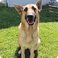 Adopt A Pet :: Samantha - PREADOPTED! - Edgewater, NJ