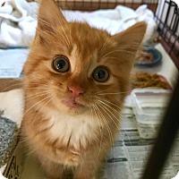 Adopt A Pet :: Georgie - Marlton, NJ