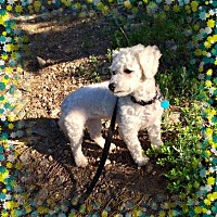 Adopt A Pet :: Adopted!! Bloomie - CO - Tulsa, OK