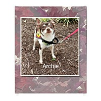 Adopt A Pet :: Archie - Norfolk, VA