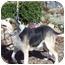 Photo 3 - Hound (Unknown Type) Mix Dog for adoption in Oakland, Arkansas - Hansom