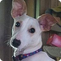 Adopt A Pet :: Bastin - Rhinebeck, NY