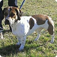 Adopt A Pet :: Charlotte - Ridgely, MD