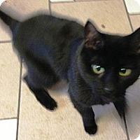 Adopt A Pet :: Precious - Chesterland, OH