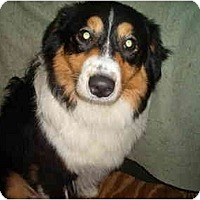 Adopt A Pet :: Cami - North Jackson, OH