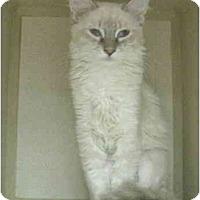 Adopt A Pet :: Fuzzy Wuzzie - Mesa, AZ