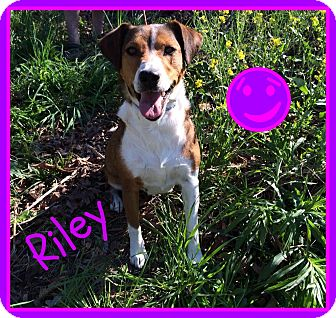 Collie Mix Dog for adoption in Lawrenceburg, Tennessee - Riley