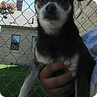 Adopt A Pet :: Zorak - Fort Riley, KS