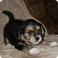 Adopt A Pet :: Hermes - La Habra Heights, CA