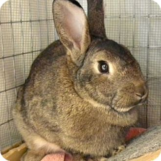 American Mix for adoption in West Kennebunk, Maine - Honey