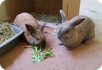 Dwarf Mix for adoption in Williston, Florida - Julian and Dollie