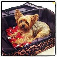 Adopt A Pet :: Ruby - Bunnell, FL