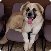Adopt A Pet :: Petey - Minneapolis, MN