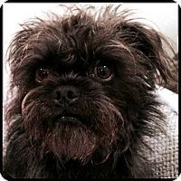 Adopt A Pet :: POSEY - ADOPTION PENDING - Los Angeles, CA