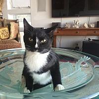 Adopt A Pet :: Jackson - Pasadena, CA