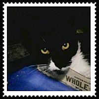 Adopt A Pet :: Bebe - Trevose, PA
