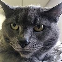 Adopt A Pet :: Scampers - Medina, OH