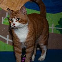 Adopt A Pet :: Chester - Walla Walla, WA