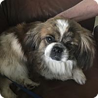 Adopt A Pet :: Lucille - Denver, CO