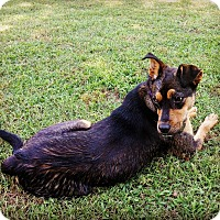 Adopt A Pet :: Scout 2 - Newcastle, OK