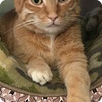 Adopt A Pet :: Charlie - Lafayette, NJ