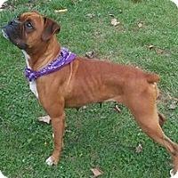 Adopt A Pet :: Zoey - Temple, GA