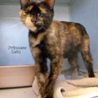 Adopt A Pet :: Princess Leia - Oskaloosa, IA