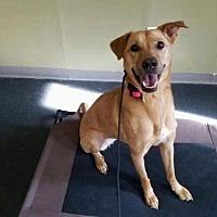 Adopt A Pet :: Aria - Tucson, AZ