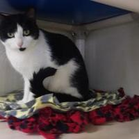 Adopt A Pet :: Layla - Fort Collins, CO