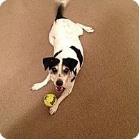 Adopt A Pet :: Fiona - Oklahoma City, OK