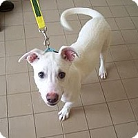 Adopt A Pet :: Jak - Jackson, MI