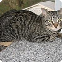 Adopt A Pet :: Wally - Shelton, WA