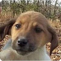 Adopt A Pet :: Demi - Plainfield, CT