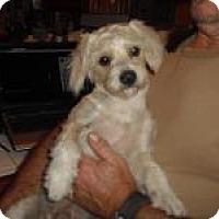Adopt A Pet :: Wiley - Marlton, NJ