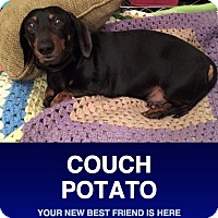 Adopt A Pet :: Franklin - Morrisville, PA
