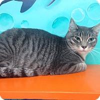 Adopt A Pet :: Buddy - Newport Beach, CA