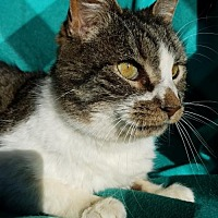Adopt A Pet :: Otis - Hornell, NY
